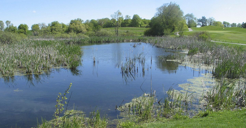 marsh area at Bathurst Glen